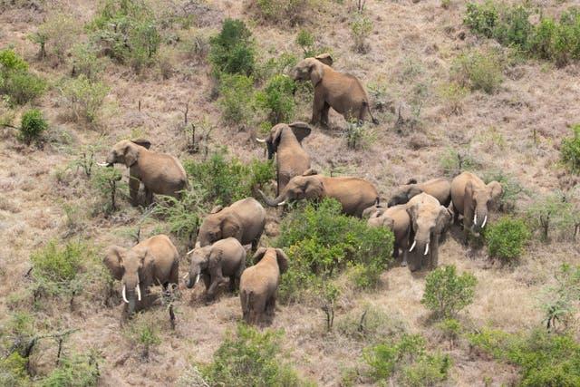 <p><em>Someof the elephants were herded to a different location</em></p>
