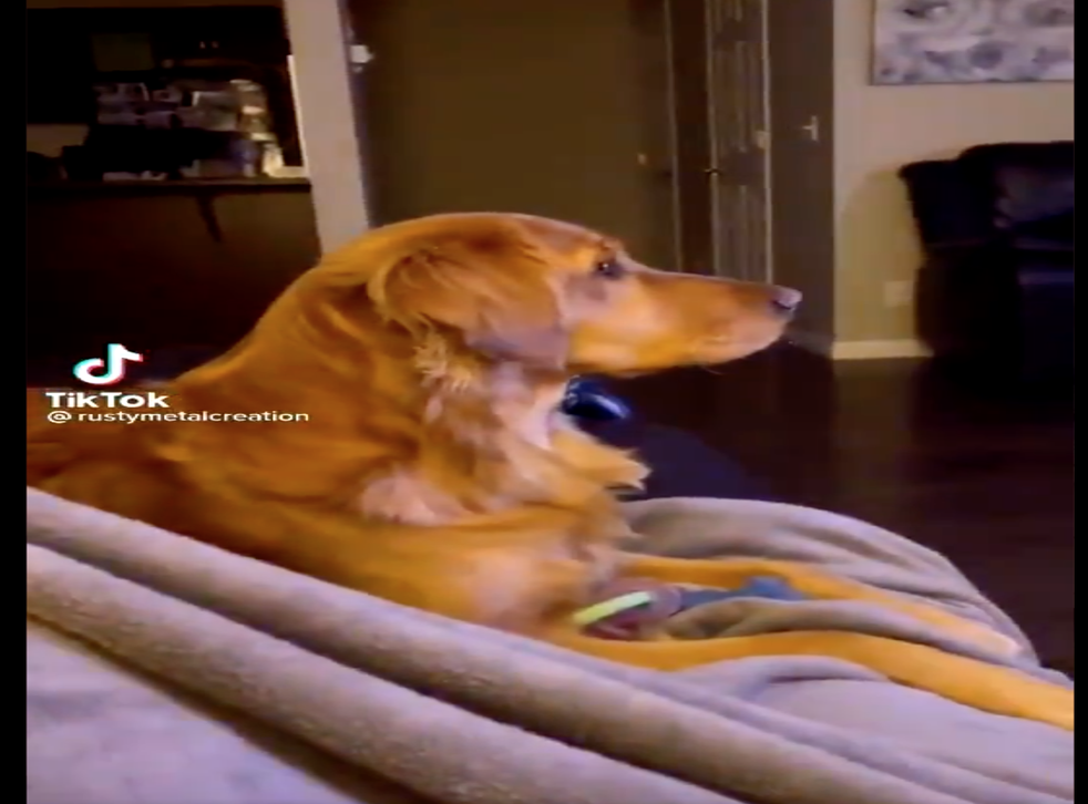 <p>Ellie the dog looks scared at the telly</p>