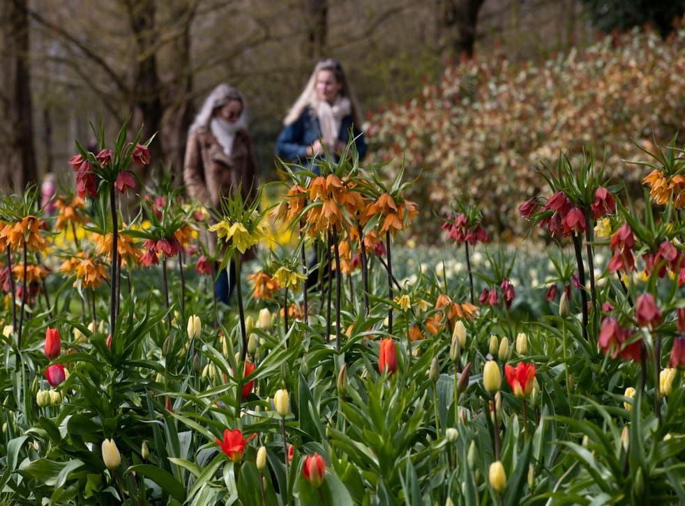 Virus Outbreak Netherlands Tulips
