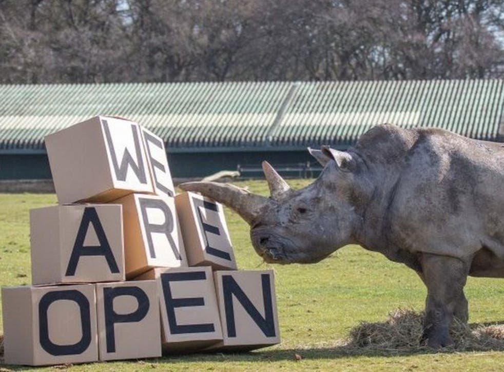 Zoos Reopen Across England After Months Of Lockdown The Independent