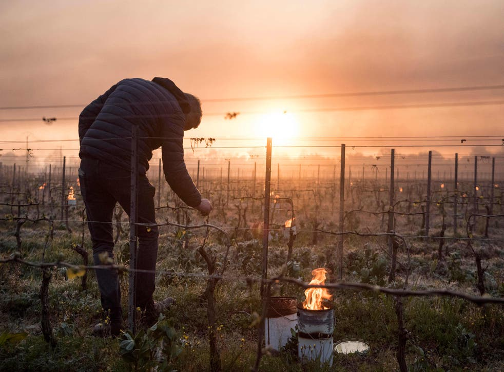 <p>Winegrowers have even lit candels in the vineyards to try and warm up the vines </p>
