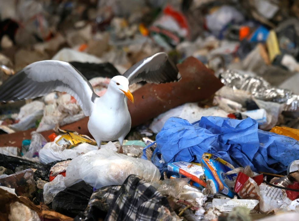 A seagull stands next to a mound of plastic in San Francisco, California