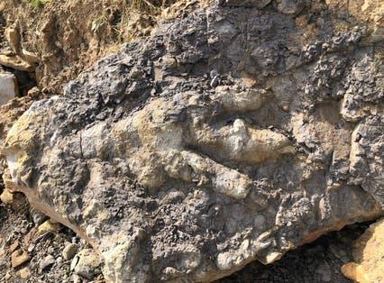 The giant dinosaur footprint found on a Yorkshire beach