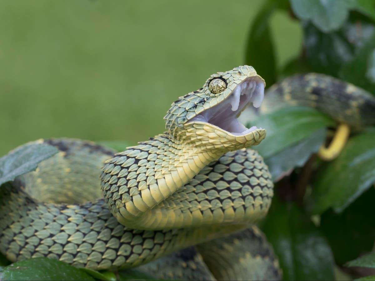 Venomous snake bites employee at California zoo