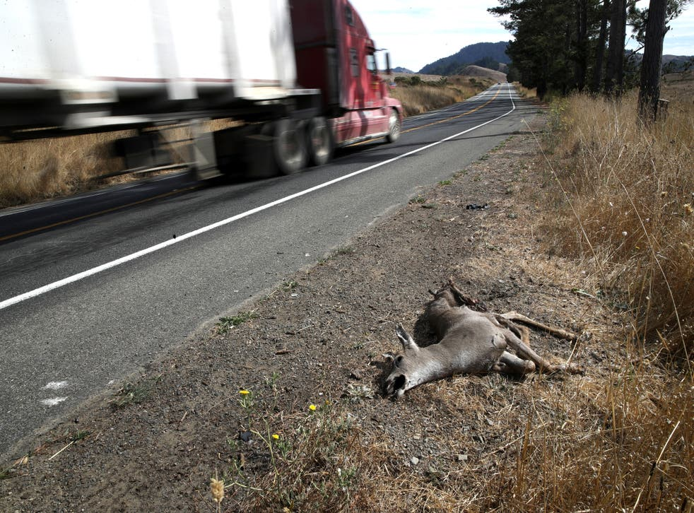 <p>Roadkill in California - where it has been legal since 2019 to take home roadkill to cook and eat.</p>
