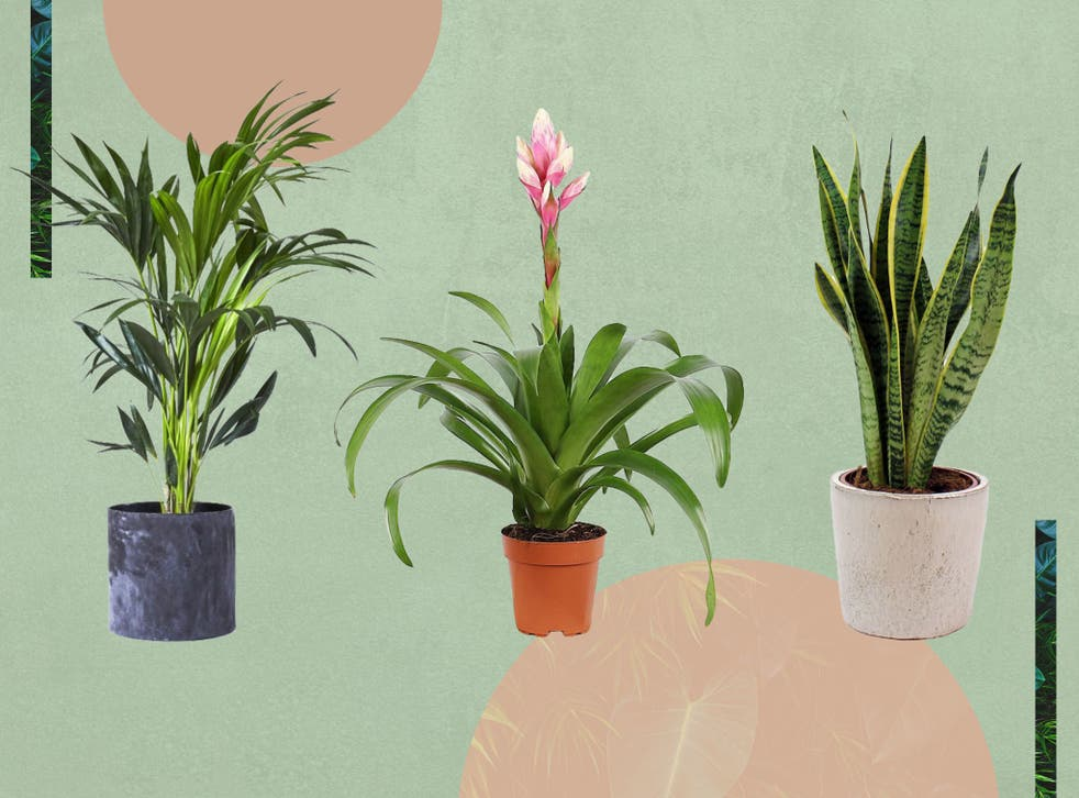<p>They can absorb pollutants in the air, and even reduce both physiological and psychological stress</p>