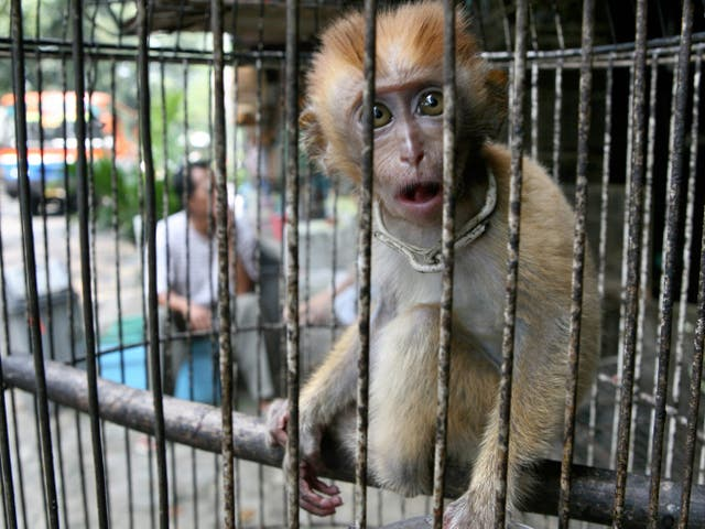 Animals are widely kept in cages at live markets around the world, raising the risk of viruses spreading, according to scientists
