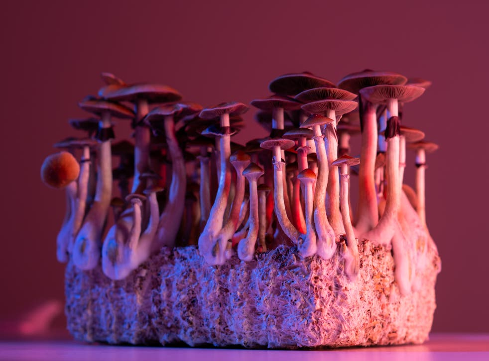 <p>Psilocybin, the active compound in magic mushrooms, may be at least as effective as a leading antidepressant medication</p>