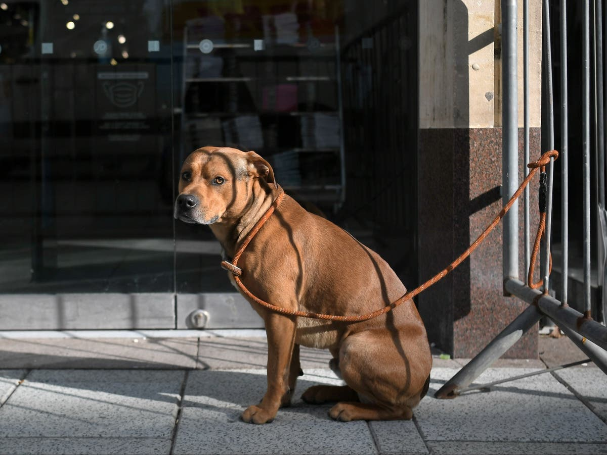 Ministers 'to ban buying pets with cash' to curb dog thefts