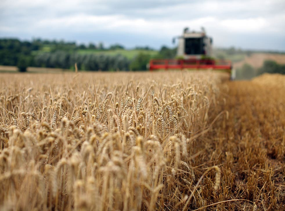 <p>High-zinc wheat is expected to make up 80 per cent of varieties distributed worldwide in the next 10 years</p>