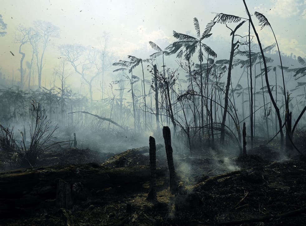 Fires burned areas of the Amazon rainforest last summer