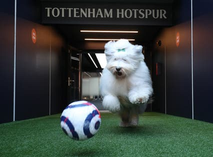 Tottenham announced Dulux as the club's official paint supplier but were then mocked on Twitter