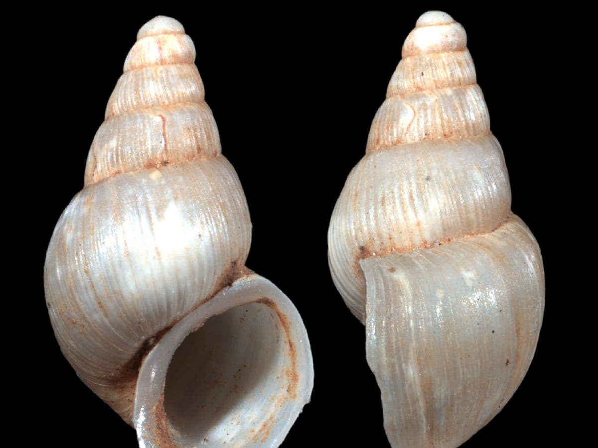 Rare snail species named after tennis great Novak Djokovic