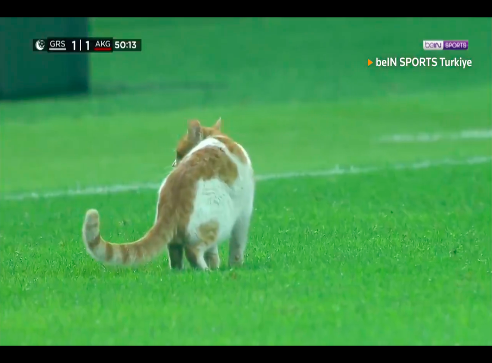 Looks like soccer players in Turkey received an unlikely guest during a recent match