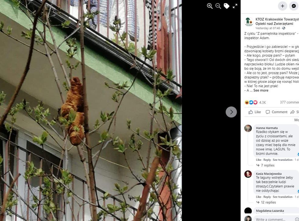 The Krakow animal-welfare society related the story on Facebook