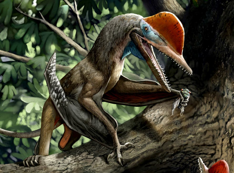 Monkeydactyl is thought to have hunted in the trees