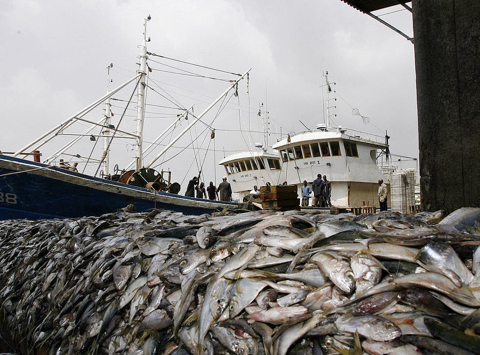 <p>'An estimated area of 1.9 million square miles is bottom trawled each year – that's 230 times the size of Wales'</p>