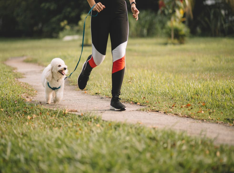 <p>Dog theft has risen 170% since 2019, according to DogLost</p>