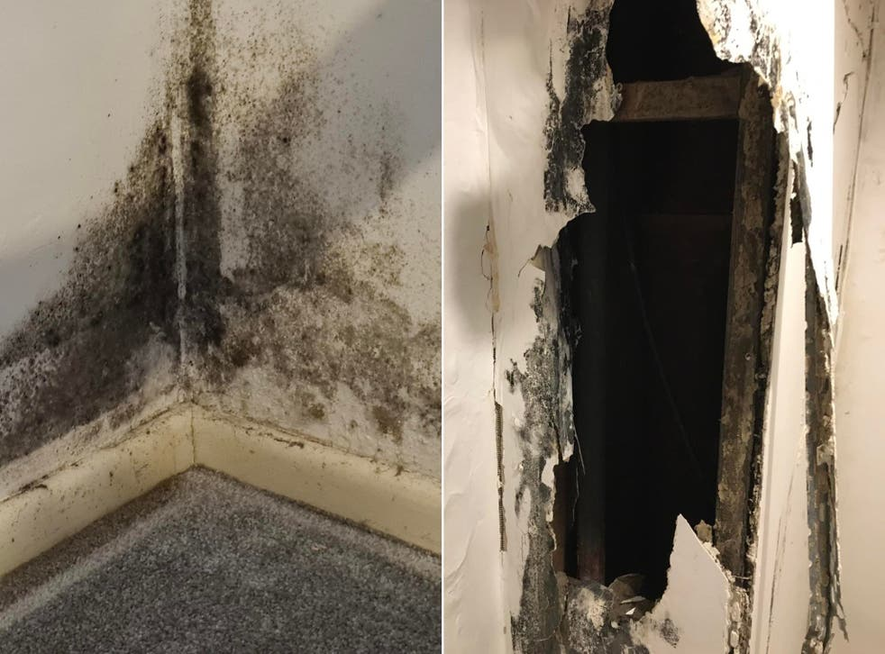 Mould and rot seen in an image shared with Shelter