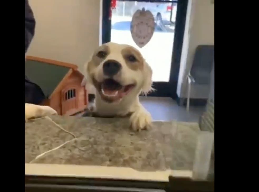 Shelter dog joyously reacts to getting adopted