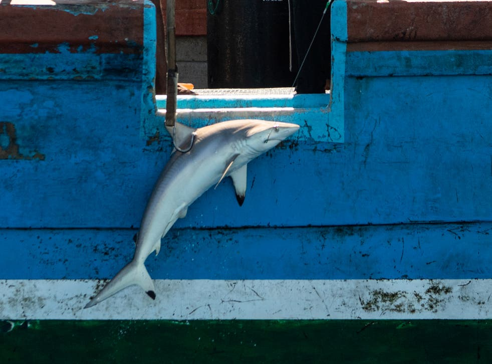 <p>A fishing boat hauls in a silky shark in the Indian Ocean on 11 April</p>