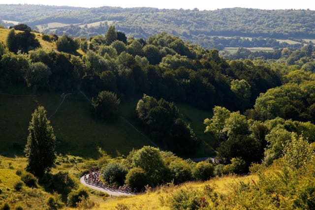 <p>Surrey is particularly leafy </p>