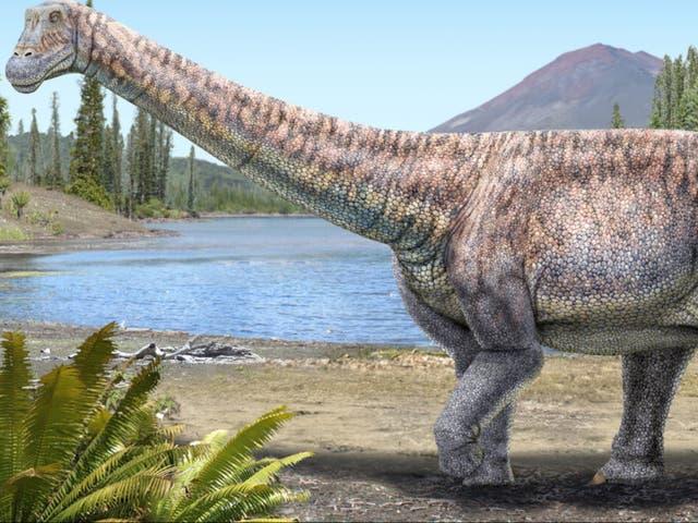 <p>Los restos del Arackar licanantay estarán exhibidos en el salón central del Museo Nacional de Historia Natural </p>