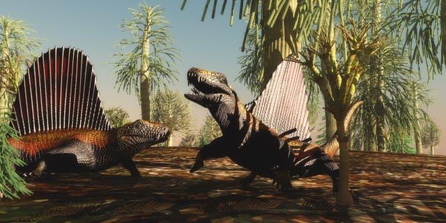 Los reptiles Dimetrodon tienen una disputa territorial sobre qué animal es más fuerte y valiente en la Edad Pérmica