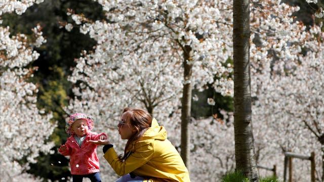 People walk at the Taihaku Cherry Orchard in Alnwick