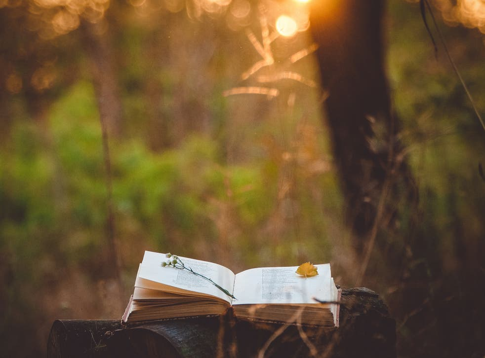 A serene stock pic of a book lying on a log near some trees