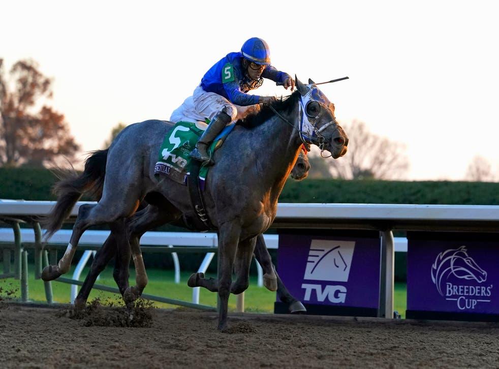 Kentucky Derby Grey Horses