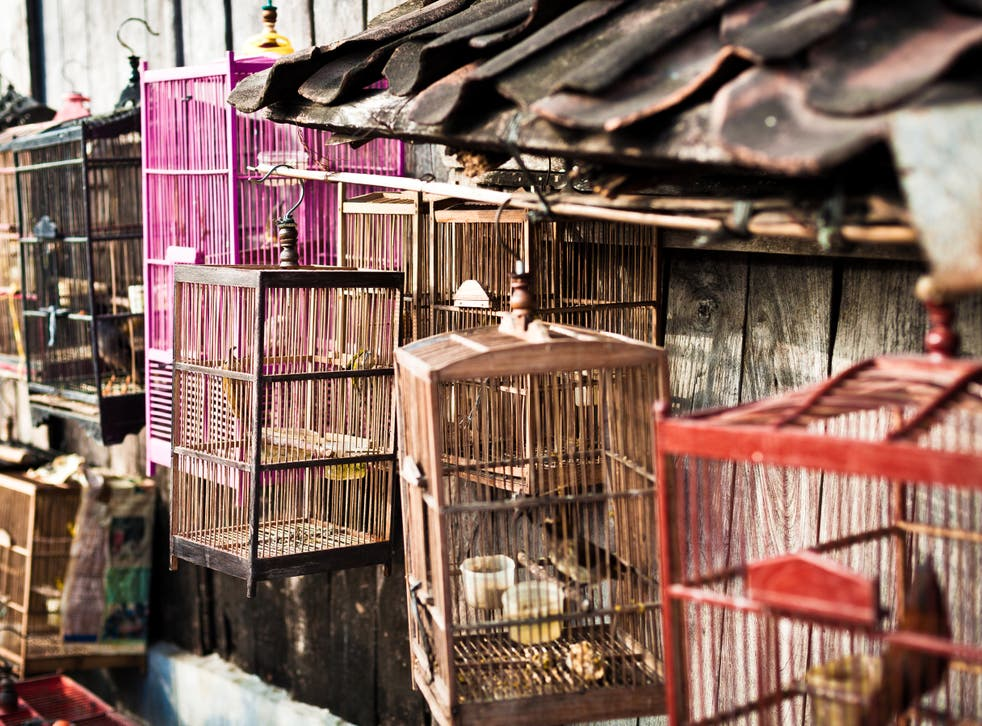 File image: Birds in cage in an Indonesian market
