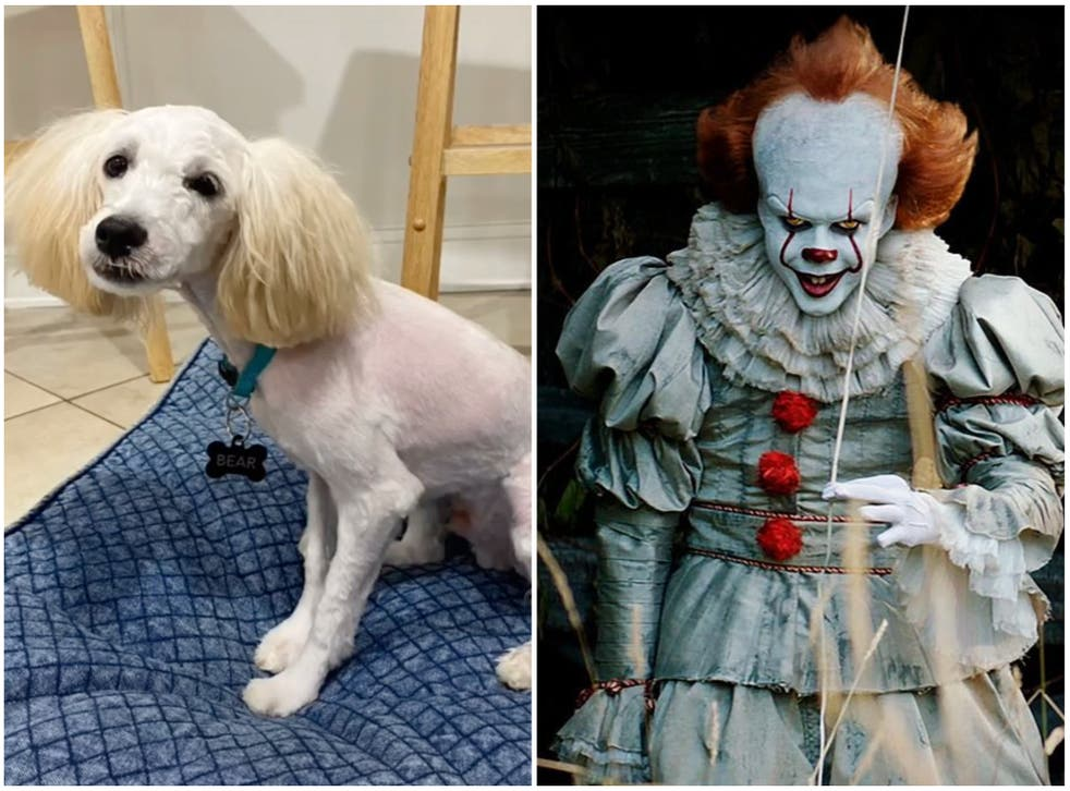 <p>Bear the dog was transformed from his cuddly former self</p>