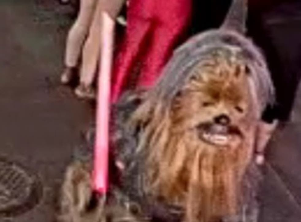 <p>Man in Chewbecca costume accused of New Orleans stabbing</p>