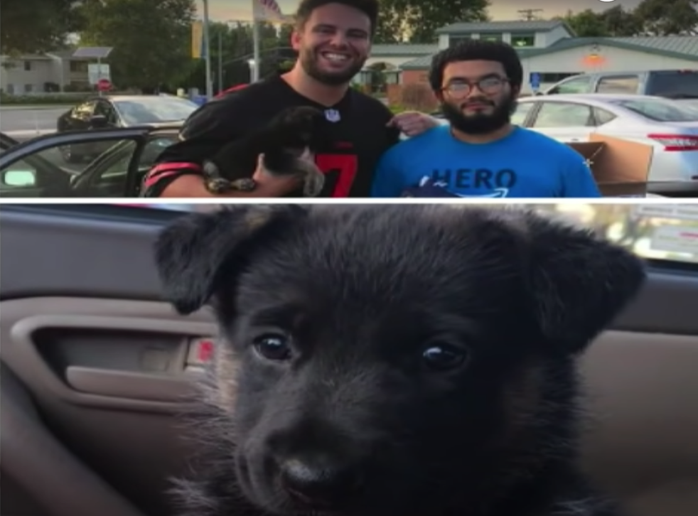 <p>This puppy has turned one after being traded for a pair of trainers. </p>