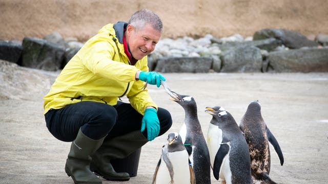 Scottish Liberal Democrat leader Willie Rennie feeds the Gentoo penguins during a visit to Edinburgh Zoo on the campaign trail for the forthcoming Scottish Parliamentary Election on May 6