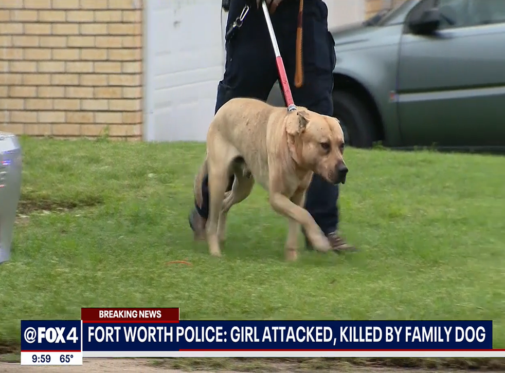 One of two dogs removed from the girl's home