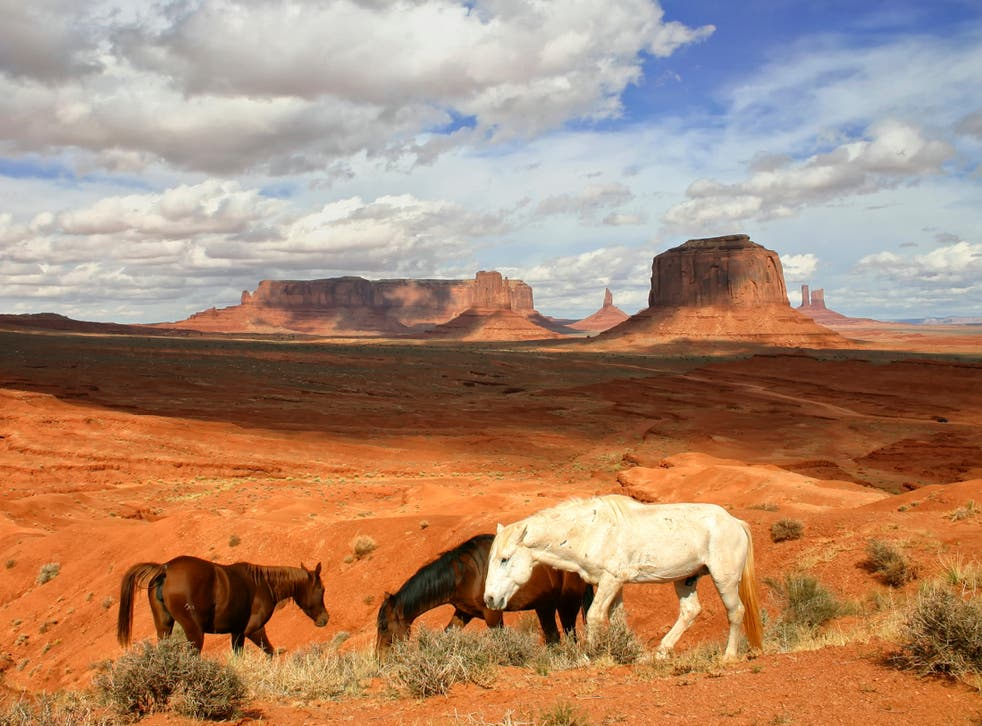 Wild horses in Arizona. Desert-dwelling wild and feral populations of horses and donkeys increase water availability for many other animals