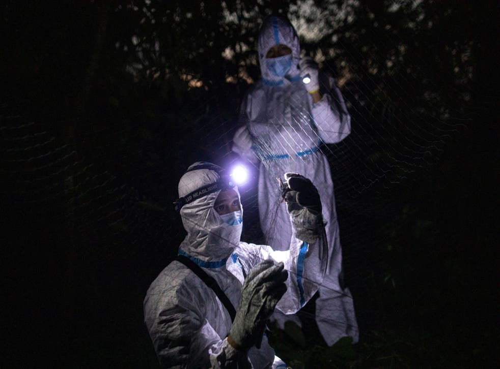 <p>Kirk Taray holds onto a bat that was caught on a mist net as Ryan Llamas holds up a torch during field work at Mount Makiling in Los Banos, Laguna province, Philippines</p>
