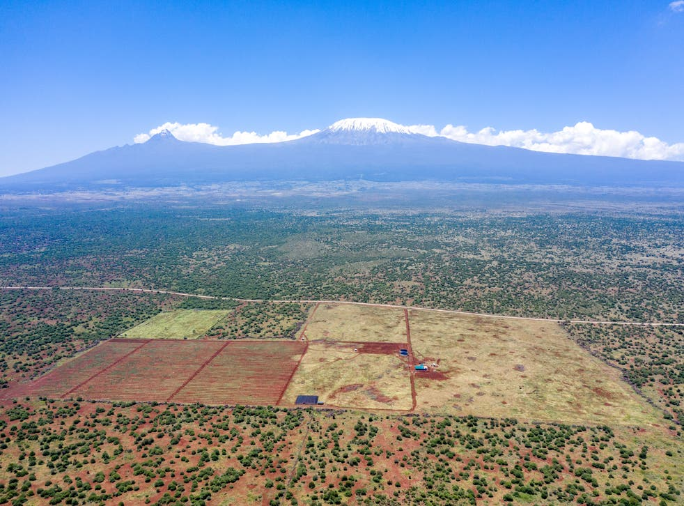 <p>KiliAvo's farm lies in the middle of an elephant migration path and key Masai grazing area</p>