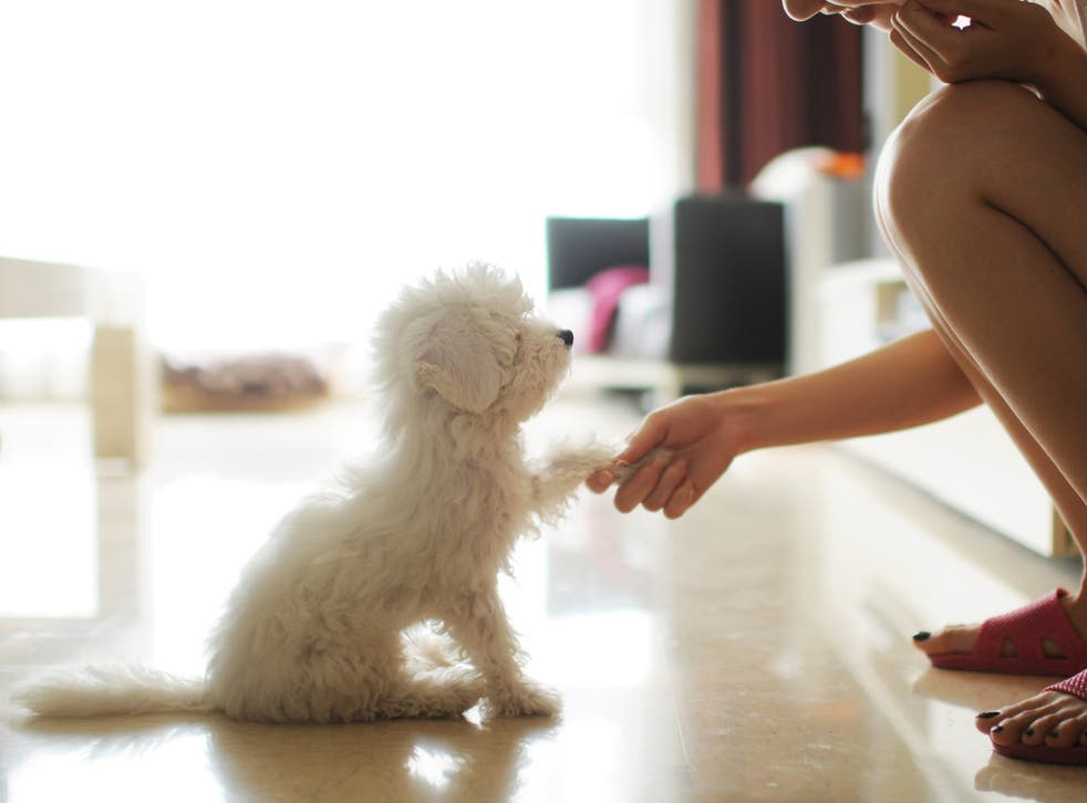 <p>The Reddit user said she now loves the dog 'more than anything'</p>