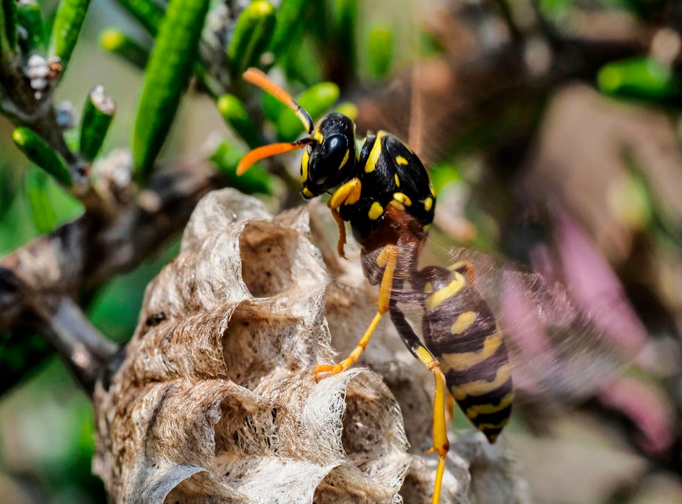 <p>Why should we care about wasps?</p>