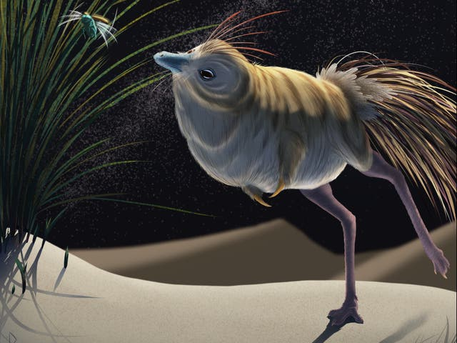 <p>An artist's impression of the shuvuuia dinosaur</p>