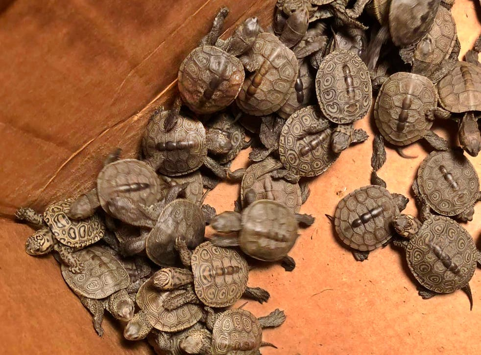 Turtle Hatchlings Rescued