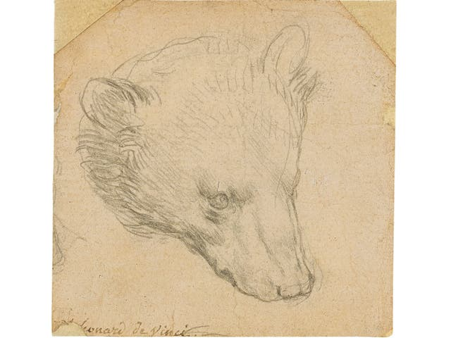 'Head of a Bear' by Leonardo da Vinci