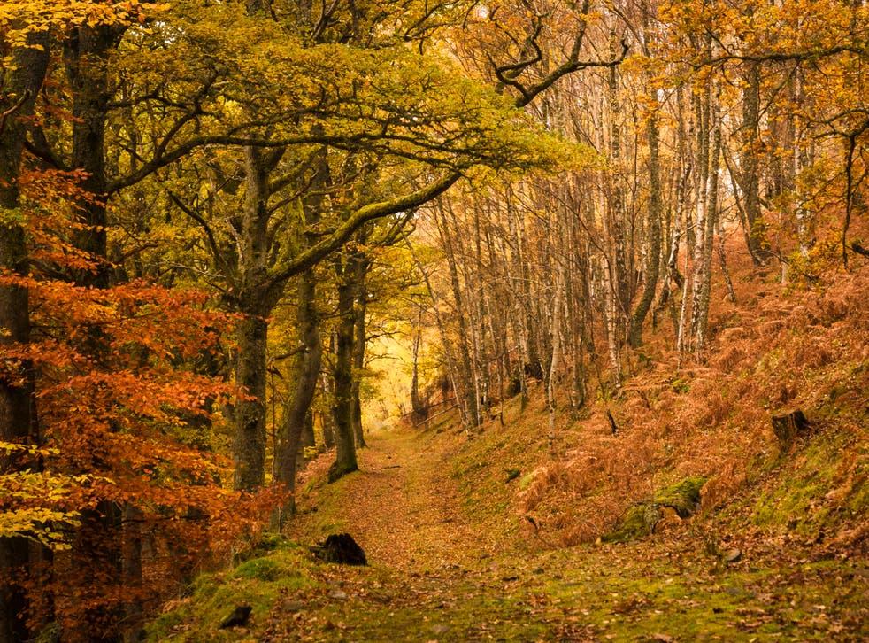 A footpath through a forest in Tayside, Scotland