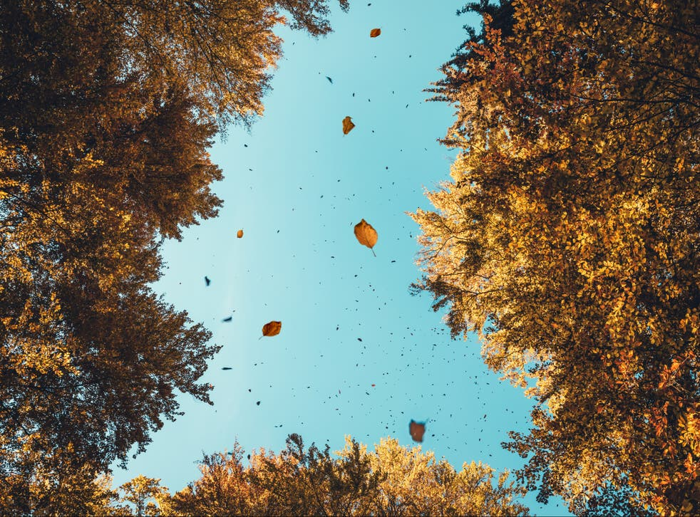 Researchers have discovered correlations between wind direction and genetic diversity in forests
