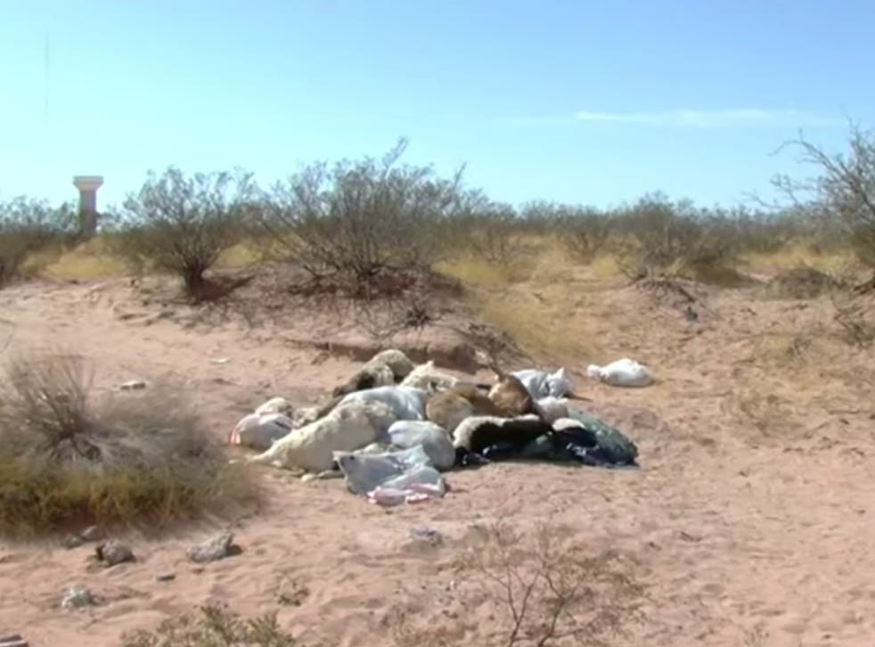 <p>Images of the dead animals dumped near El Paso, Texas</p>