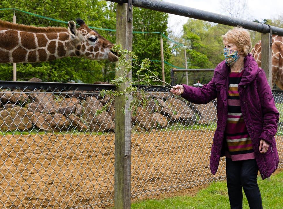 Margaret Keenan meets giraffe named after her at ZSL Whipsnade Zoo