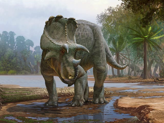 With a frilled head and beaked face, Menefeeceratops sealeyi, discovered in New Mexico, lived 82 million years ago. It predated its better-known relative, triceratops